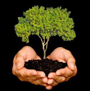 Día Nacional de la Reforestación