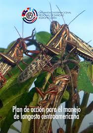 langostas centroamericanas