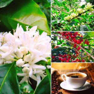 cafe y cultura